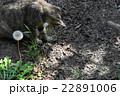 のら猫vsムカデ 22891006