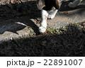 のら猫vsムカデ 22891007
