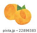 アプリコット イラスト 22896383