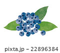 ブルーベリー 果実 果物のイラスト 22896384