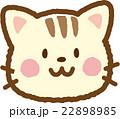 猫(縞) 22898985
