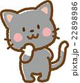 猫(黒猫) 22898986