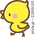 ヒヨコ 22899105