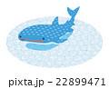 ジンベエザメ【沖縄・シリーズ】 22899471