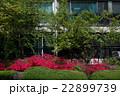 韓国旅行・景福宮のツツジ 22899739