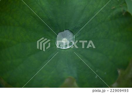 水滴, 蓮の葉の上の雨水 22909493