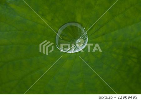 水滴, 蓮の葉の上の雨水 22909495
