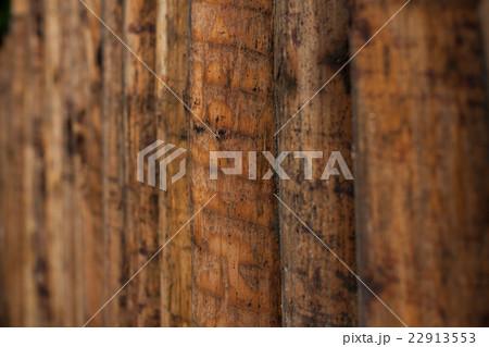自然の中の木材の背景  22913553