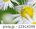 昆虫 22914399