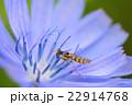 昆虫 22914768