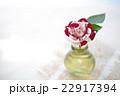 薔薇 花 瓶の写真 22917394