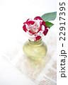 薔薇 花 瓶の写真 22917395