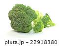 ブロッコリー 野菜 緑黄色野菜の写真 22918380