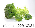 ブロッコリー 野菜 緑黄色野菜の写真 22918381