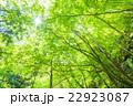 新緑エコイメージ 22923087
