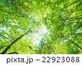 新緑エコイメージ 22923088