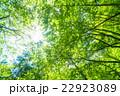 新緑エコイメージ 22923089
