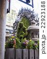 水掛不動 法善寺 苔の写真 22923188