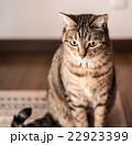 22923399