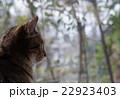 猫 窓 窓辺の写真 22923403