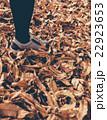 秋を歩く 22923653