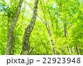 新緑 若葉 初夏の写真 22923948