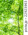 新緑エコイメージ 22923963