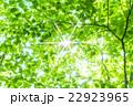 新緑エコイメージ 22923965