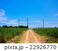 サトウキビ畑 22926770