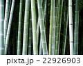 日本の竹林 22926903