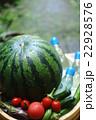 スイカ 冷やす 夏野菜の写真 22928576