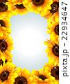向日葵の夏らしい綺麗なフレーム 22934647