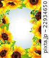 向日葵の夏らしい綺麗なフレーム 22934650