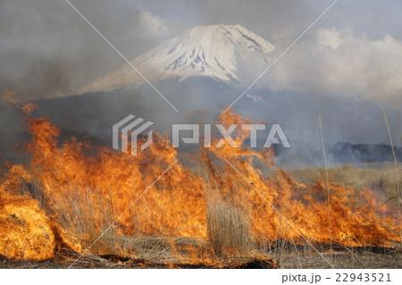 静岡県 朝霧高原の野焼きと富士山 22943521