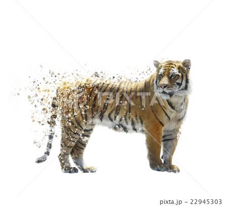 Tiger watercolorのイラスト素材 [22945303] - PIXTA