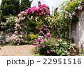バラ園 バラ 薔薇の写真 22951516