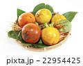 秋の味覚甘柿 22954425
