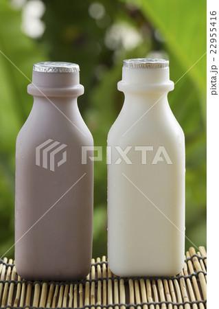 Plastic bottle of Chocolate and Fresh Milkの写真素材 [22955416] - PIXTA