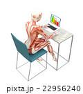 筋肉 解剖 女性のイラスト 22956240