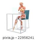 筋肉 解剖 女性のイラスト 22956241