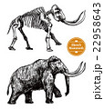 Sketch Hand Drawn Mammoth  22958643