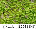 フェンス 垣根 柵の写真 22958845