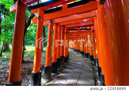 Bright red Torii in shinto shrine, Kyoto 22958899