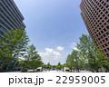 東京駅前 広場 皇居方面を見上げる 高層ビル街 春 新緑 青空コピースペース 22959005