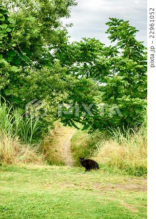 野良猫の風景 22961052