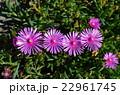 一列の花 22961745