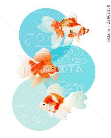 金魚1 22963150