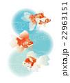 金魚2 22963151