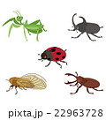 昆虫 22963728