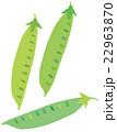 野菜 絹さや ベクターのイラスト 22963870